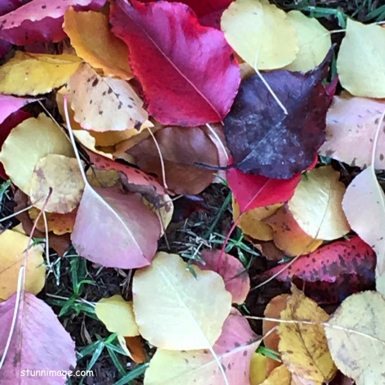 autum leaves_Fotor.jpg